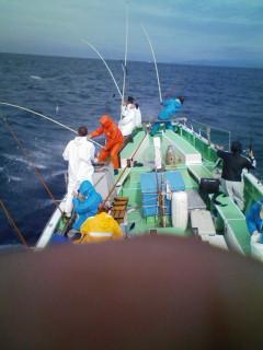 舳先は毎日こんな感じで釣ってます。4人とも食ってます!