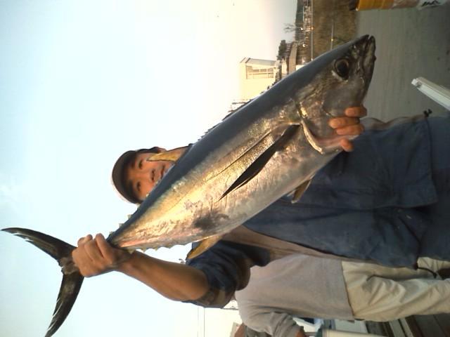 キハダマグロも船中4尾釣れました。