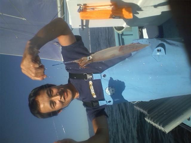 18日 瀬の海のイカです。